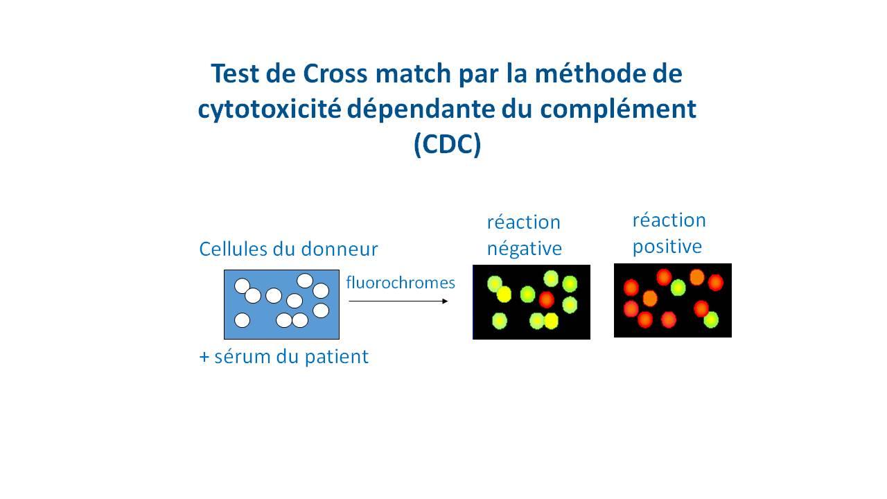 test de cross match